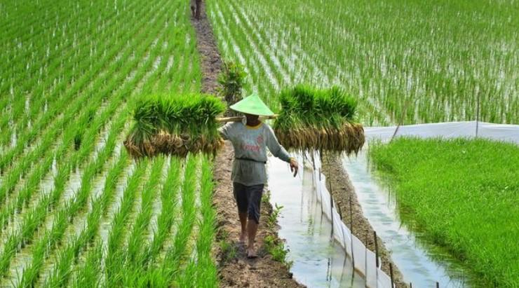 Pentingnya Software Akuntansi Accurate Dalam Bisnis Pertanian